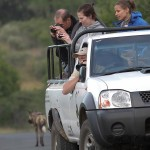 Wildlife ACT volunteers photographing wild dogs in iMfolozi