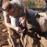 Collecting Rhino Data. Photo: Kelvin Trautman