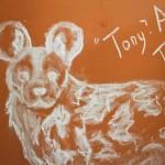 iMfolozi's volunteer message board - Wild Dog sketch