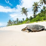 Volunteer in the Seychelles