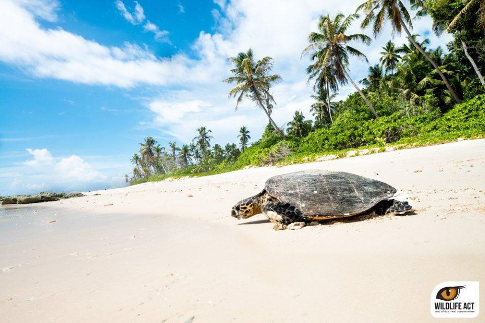 Seychelles Volunteering Holiday on North Island