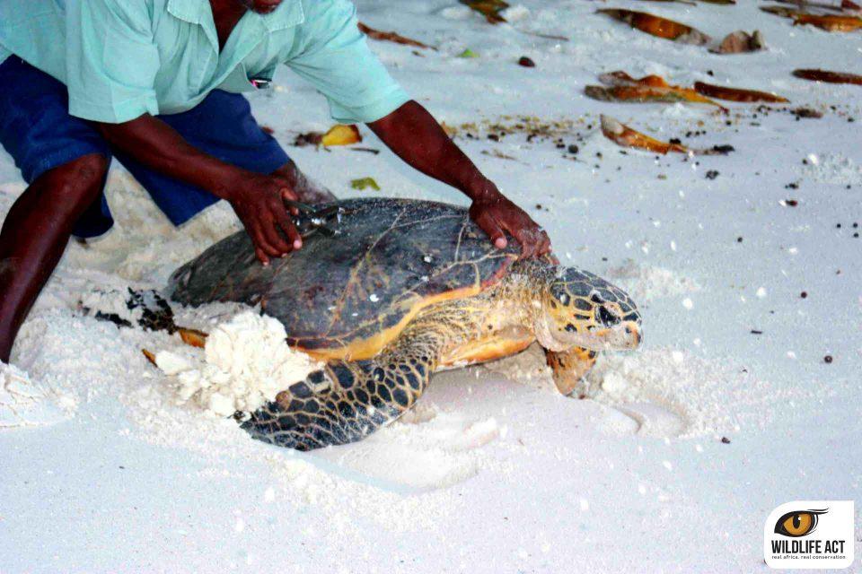 Volunteering in the Seychelles 20