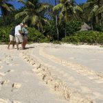 Tagging turtle tracks. Photo by Paul Hayes