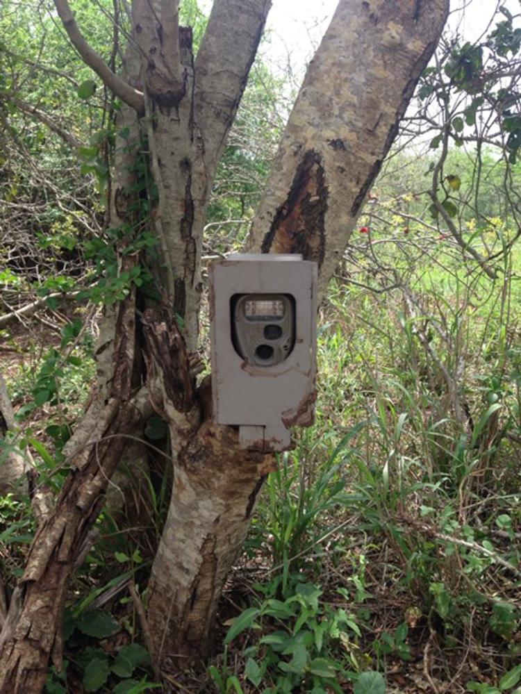 A motion sensored camera trap