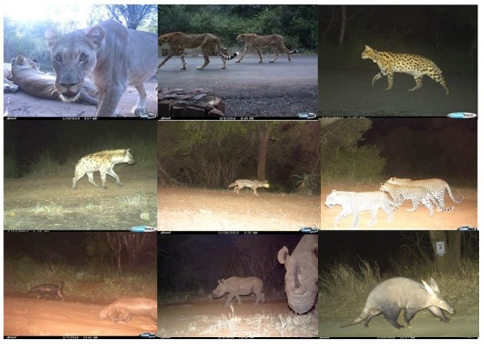 camera trap images