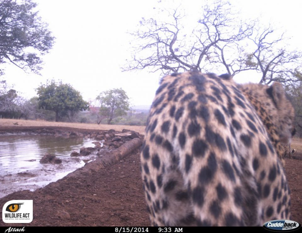 ZRR camera trap images