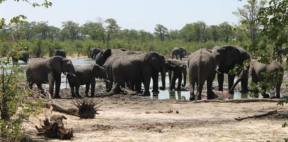 Elephants Okavango