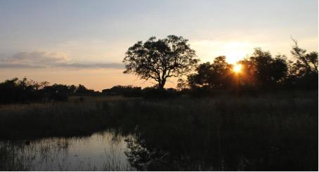 Sunset Okavango Delta.