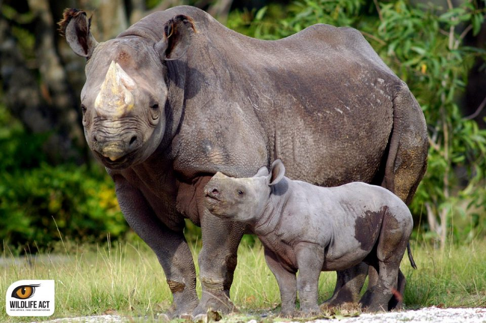 Black Rhino Conservation with WWF