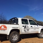 Cape Town Wildlife Project