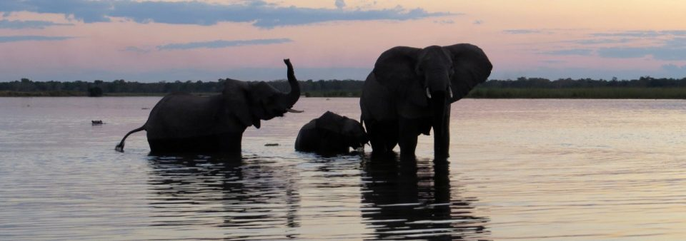 Elephant Header - World Wildlife Day 2017