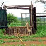 Cheetah Release ZRR Dec 2016