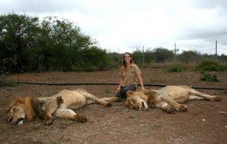 Lion Contraception vs Lion Relocation