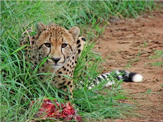 Newsletter: Winter greetings from Zululand!