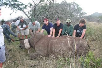 Rhino conservation - summary 2011