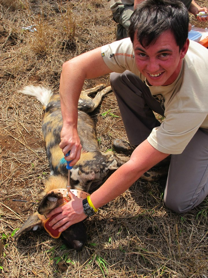 Cole assisting with a Wild Dog collaring in Zululand.