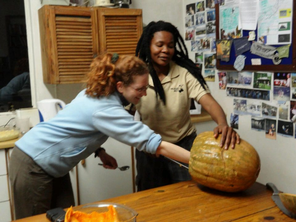 Conservation volunteer cleaning out the Halloween pumpkin