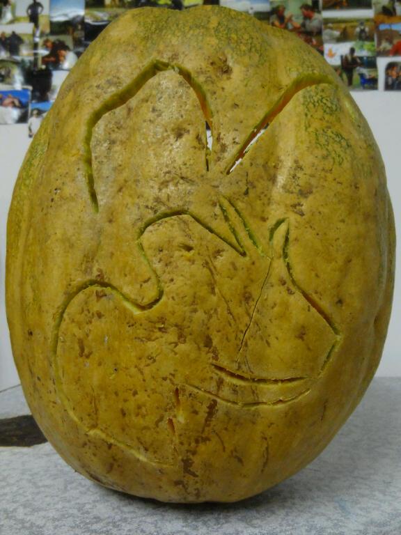 Wildlife ACT logo traced into the pumpkin