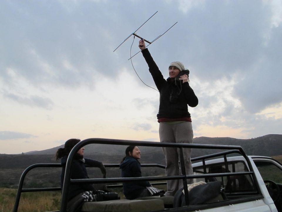 Stefanie Nagid using a telemetry to monitor endangered species.
