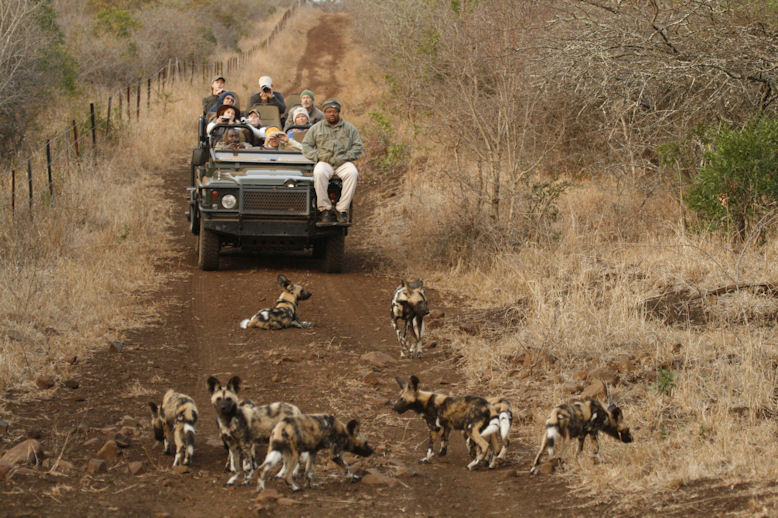 Wild Dog puppies on Thanda