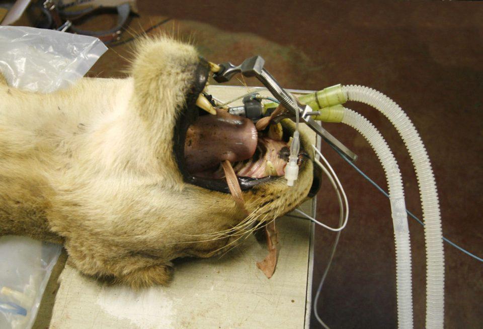 Mouth breathing tube