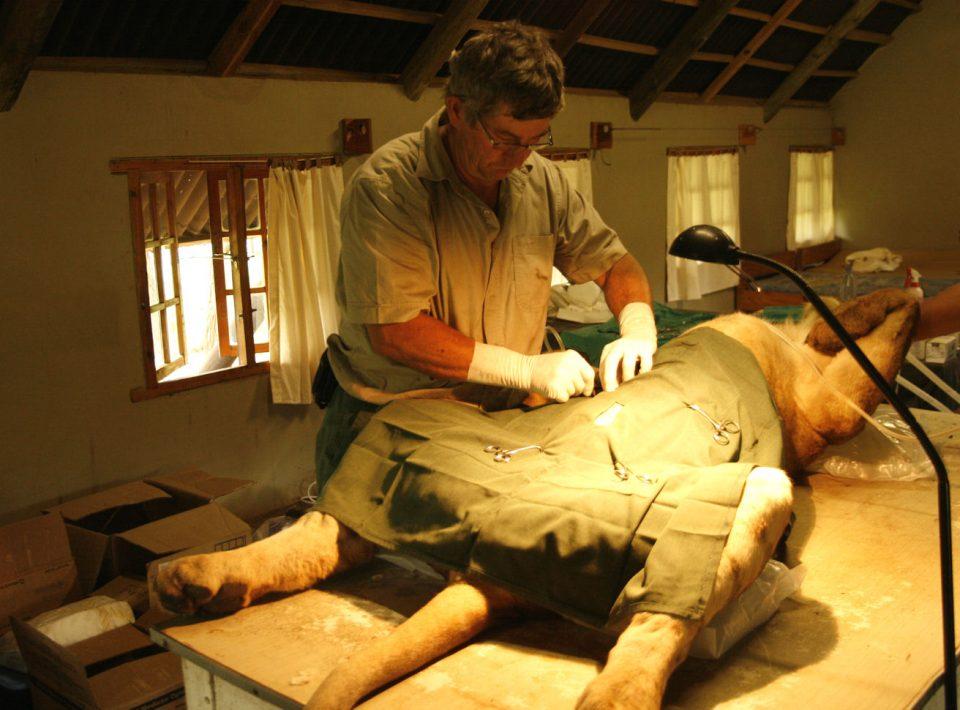 The vet setting up