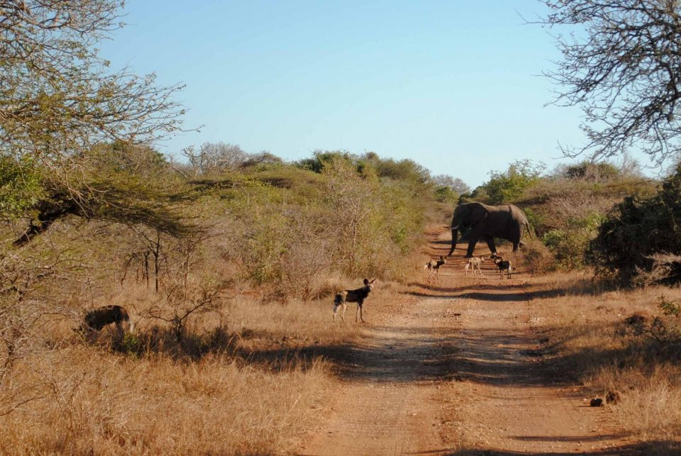 uMkhuze Game Reserve, Zululand, South Africa
