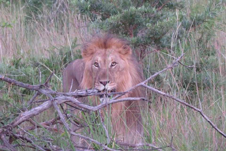 Mugwadule - Lion call ups in Tembe Elephant Park