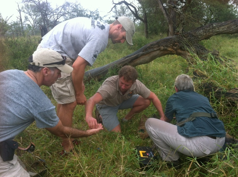 Ezemvelo KZN Wildlife honorary officer assists Chris Kelly and Johan Maree, joined by conservation volunteer Casper Oelofsen