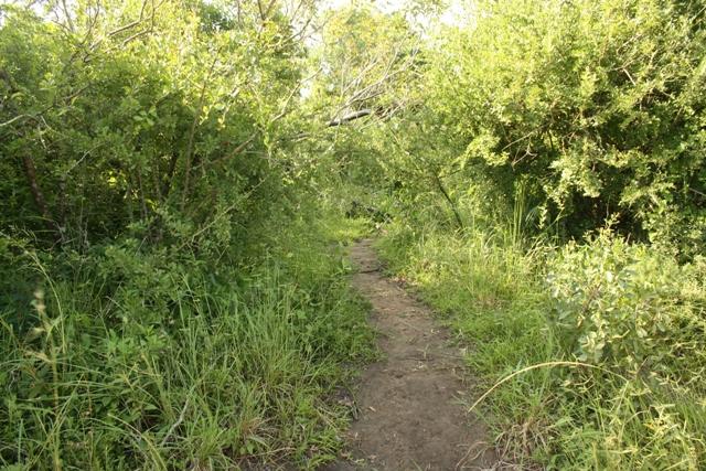 Well-used animal path