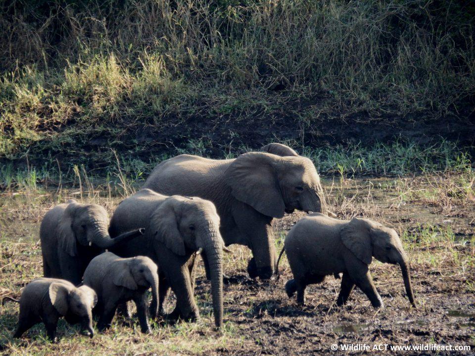Elephant monitoring in Mkhuze
