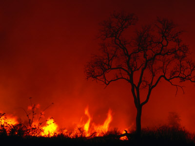 What a veld fire can look like