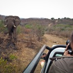 Volunteer photographing elephant in Hluhluwe