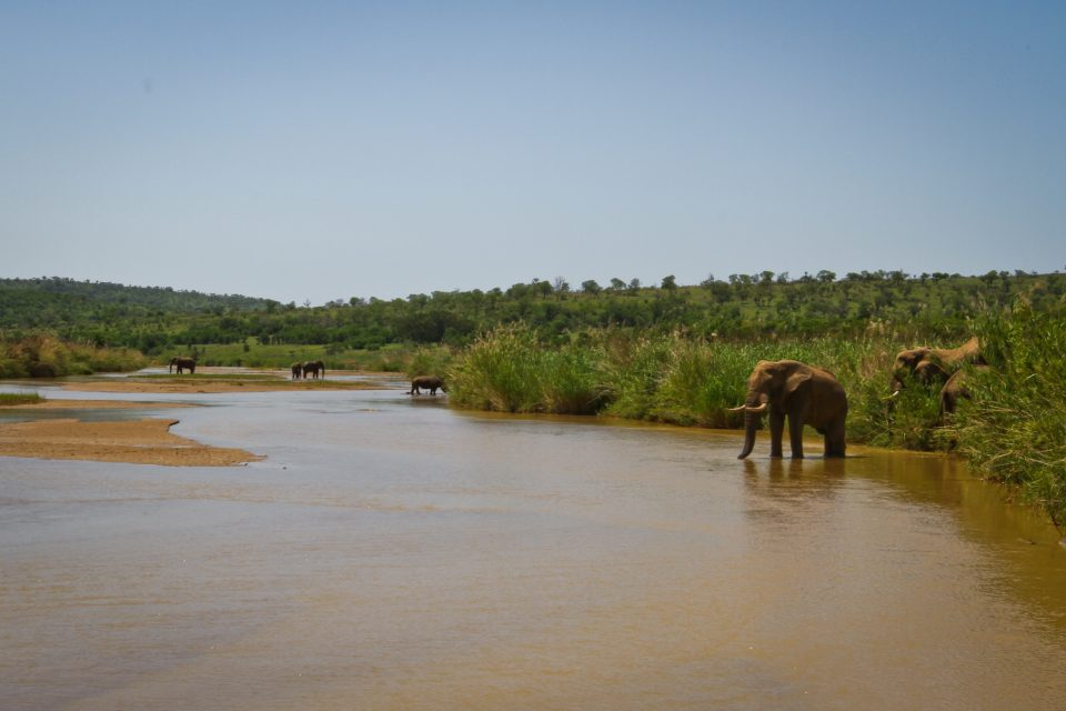 Elephant in the iMfolozi River