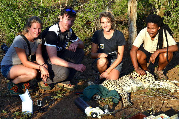 Volunteer with Cheetah