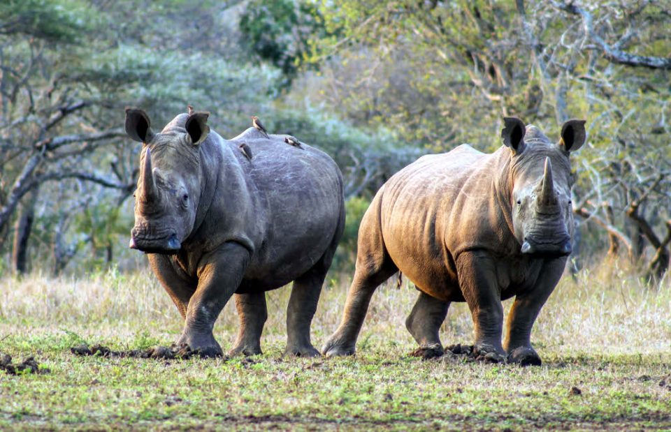John Hume Rhino Horn Auction Arguments