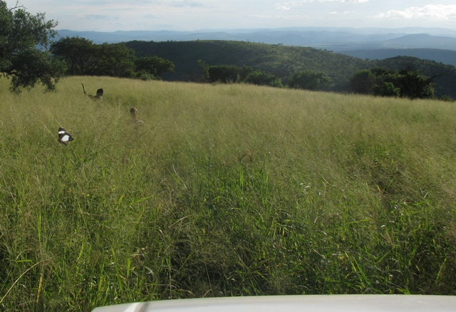 Panthera Leopard Survey 2014