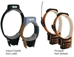 GPS and VHF Tracking Collars used for Wildlife Monitoring