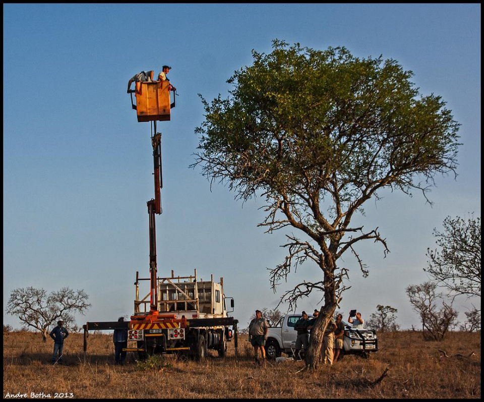 Cherry Picker Looking at vulture Nest