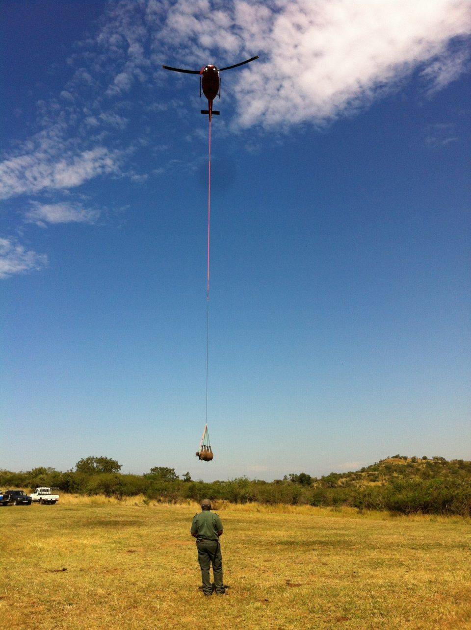 Rhino suspened from a helicopter - Rhino Airlift