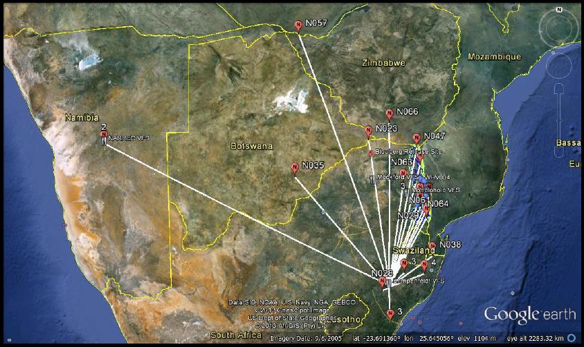Vulture Flight Patterns Map, Wing Tagging & Ringing