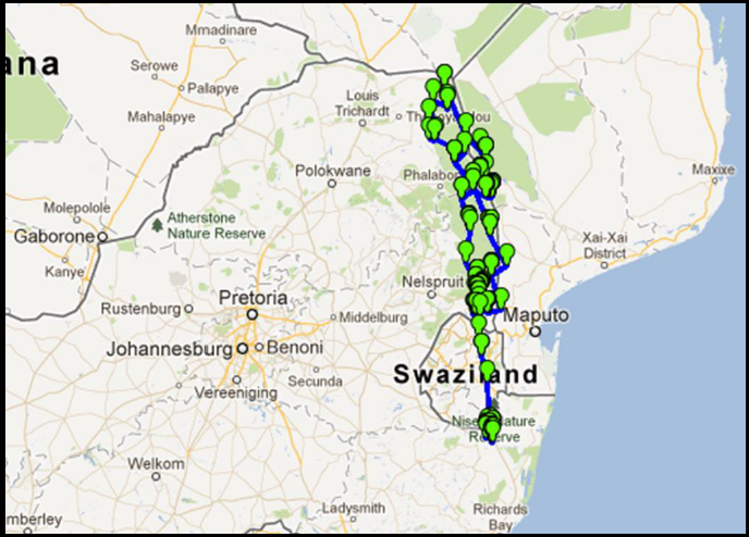 Vulture Flight Patterns Map, Wing Tagging & Ringing African White-backed Vulture