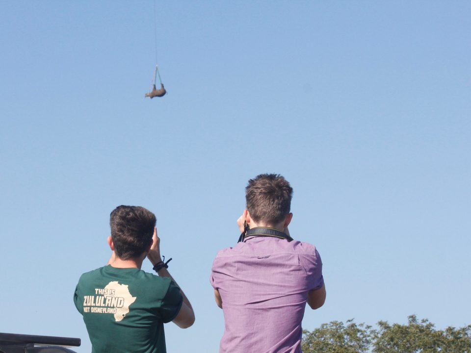 Volunteers watching a rhino airlift