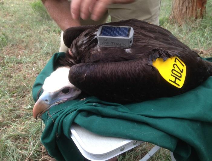 Vulture GPS backpack