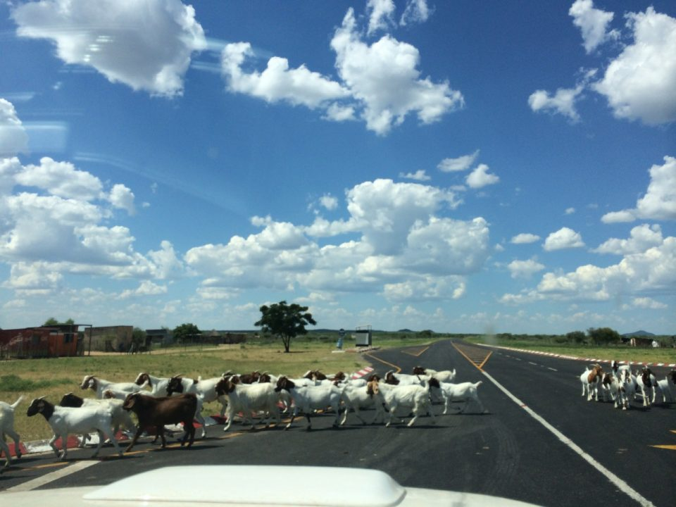 Traffic heading into Botswana
