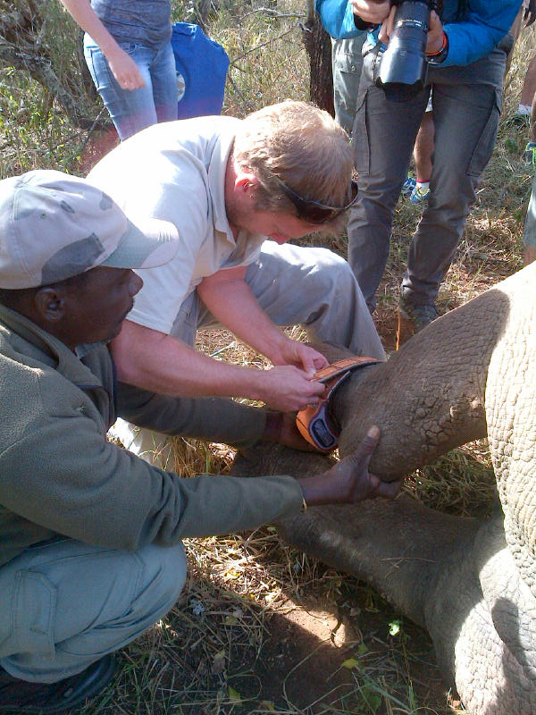 Chris Kelly fitting a rhino ankle collar - Rhino Conservation Efforts on Somkhanda Game Reserve