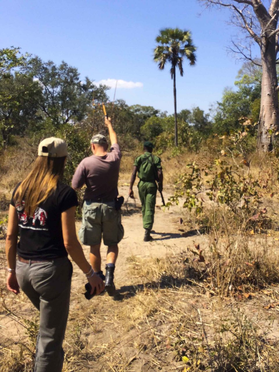 Tracking black rhino using a telemetry