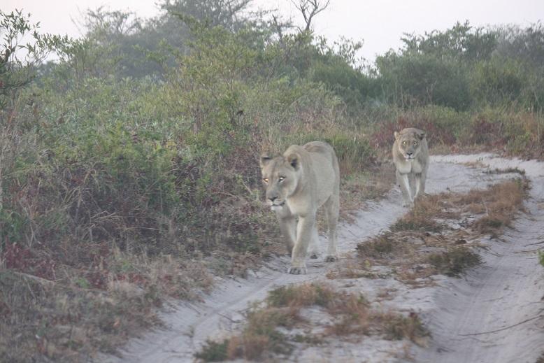 Tembe Lions Kampa and Nkanyezi