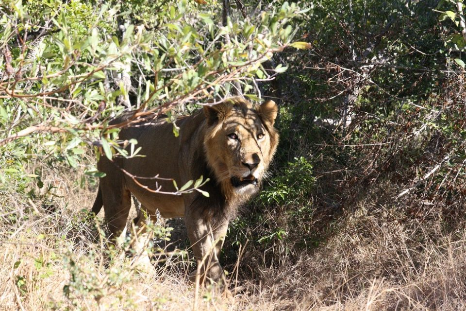 Lion TEPM86
