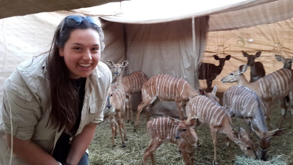 Charlotte Moore feeding nyalas